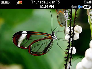 Busy-Transparent-Butterfly_1